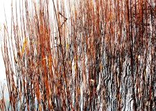 Gras, Schilf, Holz