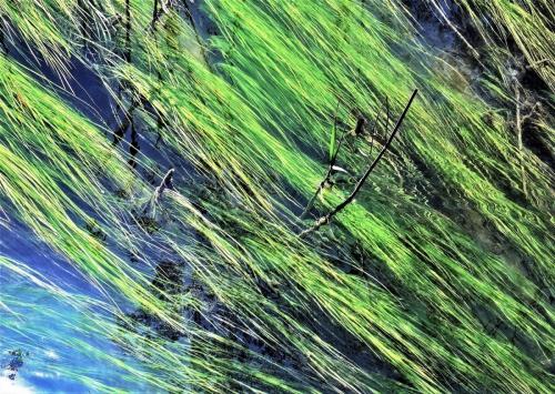 Wasserpflanzen 2 (Osterseen)